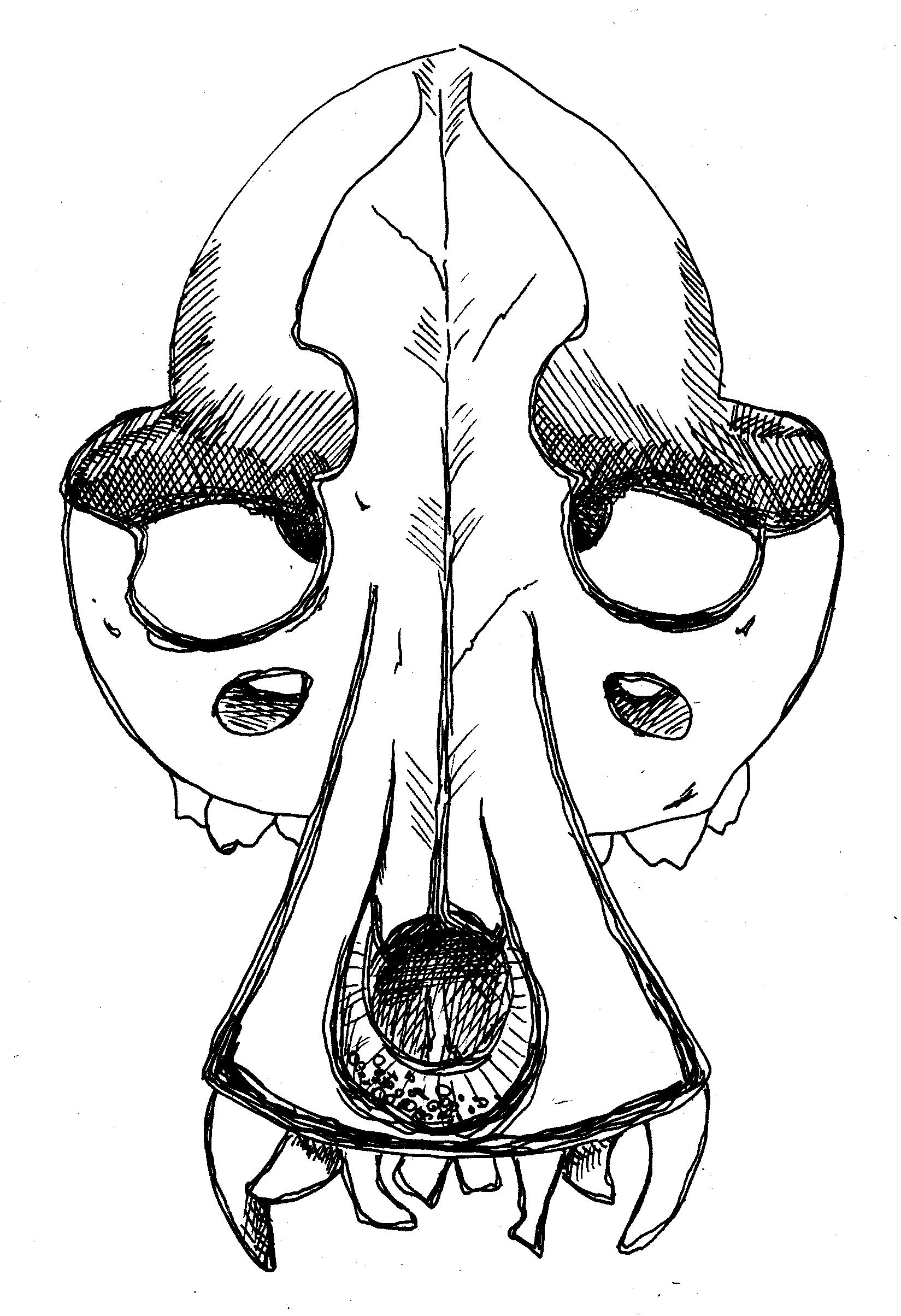 Саловей - череп собаки